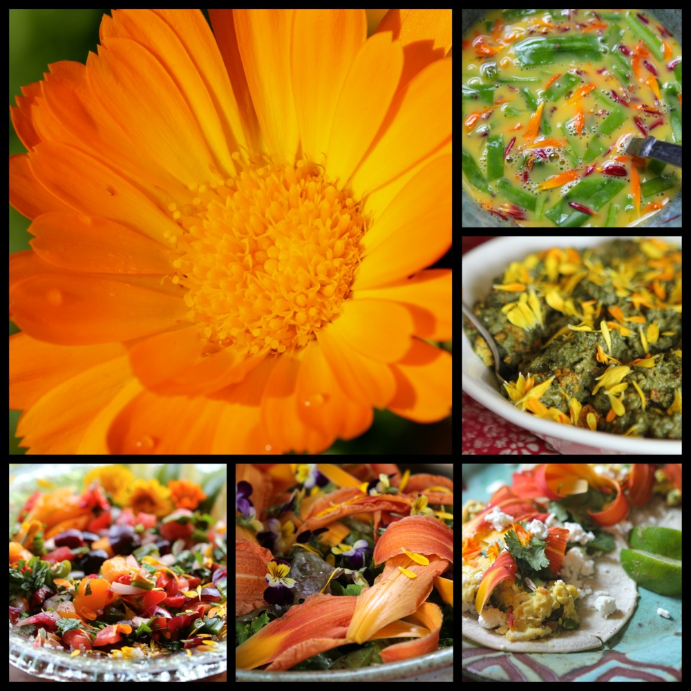 Calendula-edible-flowers