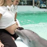 Dolphins May 'See' Pregnant Women's Fetuses