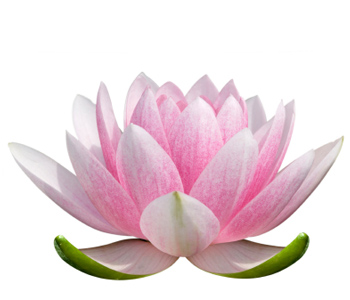 The exquisite lotus flower womans vibe references to the lotus flower symbol are also found in the tradition of hatha yoga which features sitting in the lotus position during meditation as a mightylinksfo