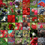 Berries from A to Z