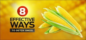 8-Effective-Ways-to-Detox-GMOs_aNu_26-11-2014_735x350 (2)