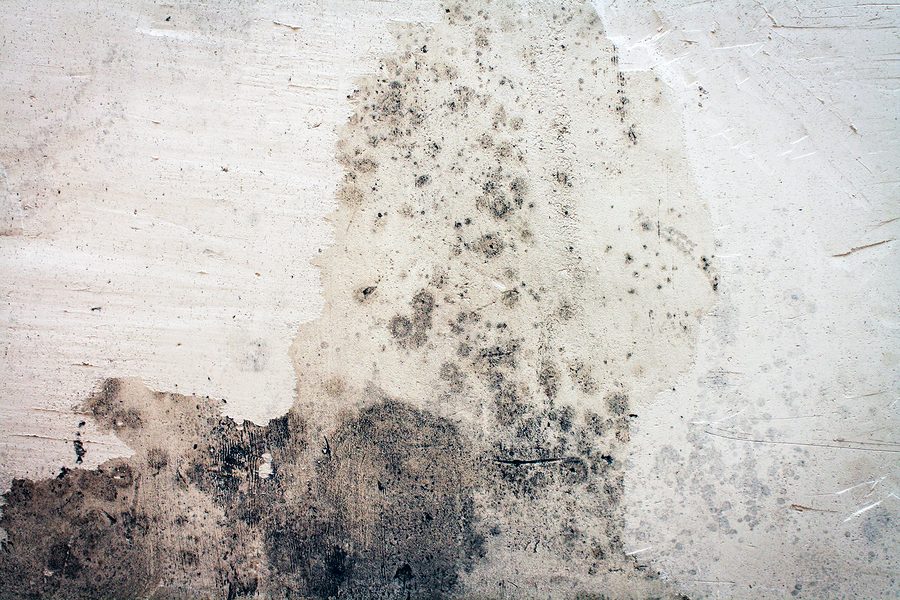 3 Ways To Kill Mold In Your Home Naturally Womans Vibe