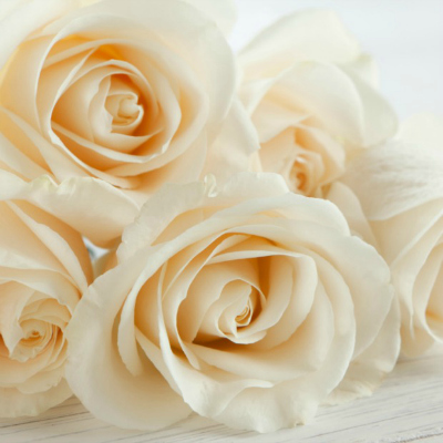 3-white-rose-meaning-lgn
