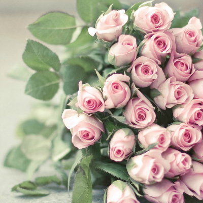 4-pink-roses-meaning-lgn