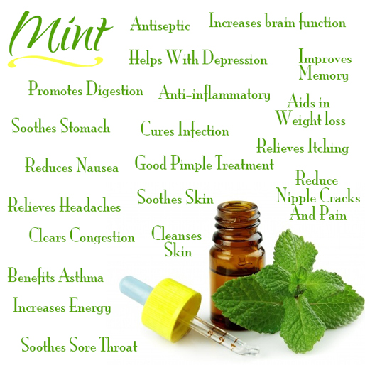 fresh-mint-health-benefits