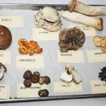 Know Your Mushroom Varieties And How To Cook With Them Best