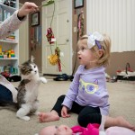 3 Legged Kitten Adopted By Amputee Girl Becomes Her Best Friend