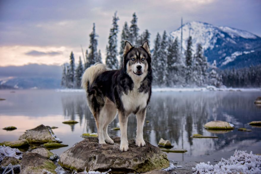 i-rescued-a-husky-and-later-he-saved-me-from-an-abusive-relationship-5__880 (1)