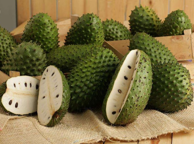 soursop-graviola-fruit