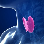 ALL YOU NEED TO KNOW ABOUT YOUR THYROID