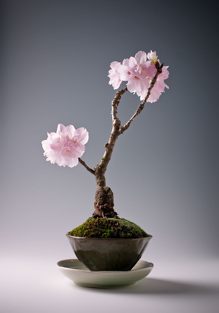 amazing-bonsai-trees-3-1-5710e79064ec0__700