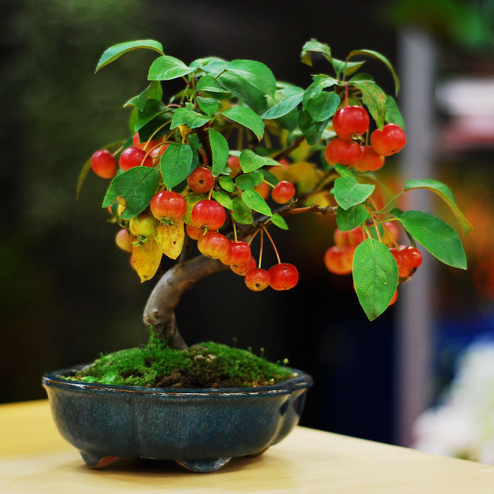 amazing-bonsai-trees-5-2-5710e798a4b5f__700