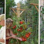How to Grow a Constant Supply of Organic Food in the Tiniest Amount of Space