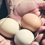 What Happens To The Eggs Inside Your Refrigerator Might Be Worse Than You Thought