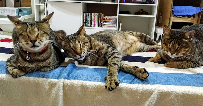 adopted-three-blind-cats-7
