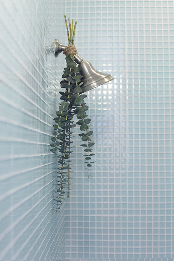 Eucalyptus-on-shower-head-with-blue-tile