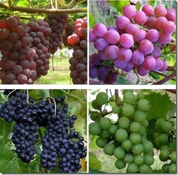 Natural Healthy Resources - Fruit Wine[4]