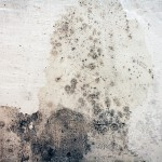 3 Ways To Kill Mold In Your Home Naturally