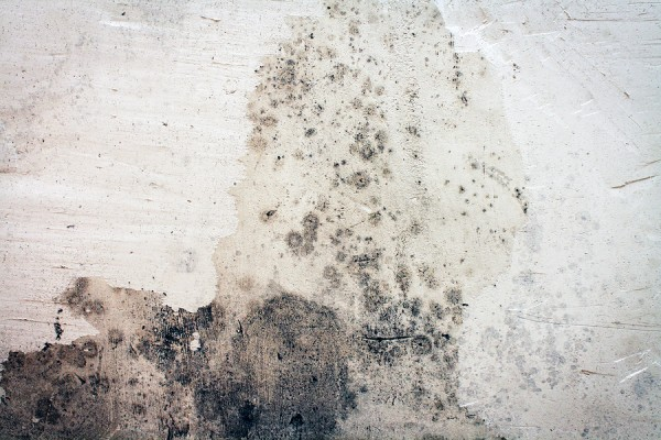 Moldy-Wall-Mold-Removal-Clean-Up