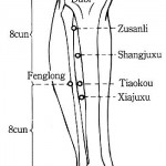 Zu San Li – A Point of a Hundred Diseases On Your Body: Here is What Will Happen if You Massage it!
