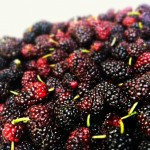 The Extraordinary Health Benefits of Mulberries