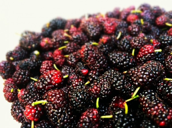 mulberry-pile
