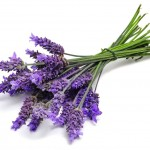 Calming and Mood-Boosting Scents