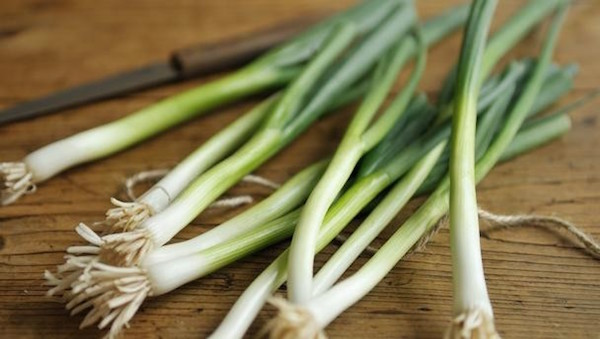 do-not-throw-away-the-green-picks-of-spring-onions-these-parts-have-amazing-positive-effects-on-the-health