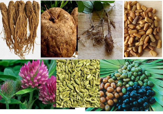 herbs-for-breast-growth