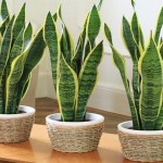 5 Plants For Your Bedroom To Help You Sleep Better