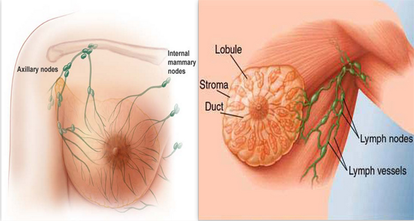 The-Causes-Of-Breast-Cancer
