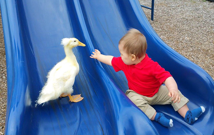 pet-duck-boy-best-friends-mr-t-and-bee-tyler-young-8