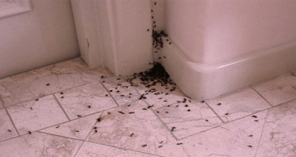 How-to-get-rid-of-ants-in-the-house