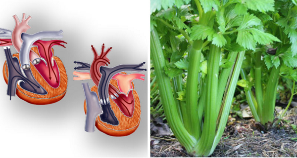 THE-TOP-15-REASONS-YOU-SHOULD-BE-EATING-CELERY-EVERY-DAY