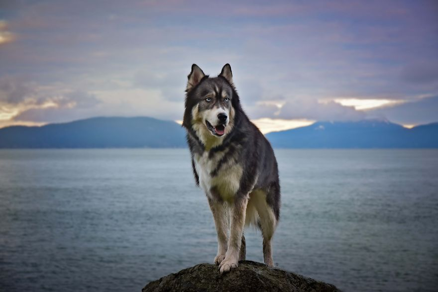 i-rescued-a-husky-and-later-he-saved-me-from-an-abusive-relationship-2__880 (1)