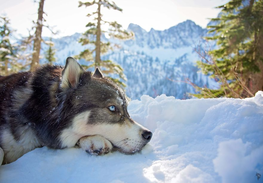 i-rescued-a-husky-and-later-he-saved-me-from-an-abusive-relationship-8__880 (1)