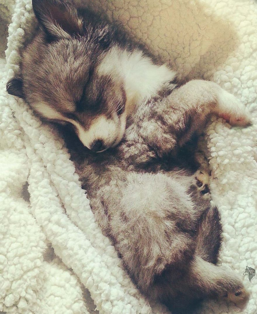 i-rescued-a-husky-and-later-he-saved-me-from-an-abusive-relationship__880 (1)