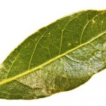 Burn Bay Leaves in the House and See What Would Happen in just 10 Minutes