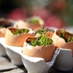 15 Surprising Uses for Eggshells and Egg Cartons