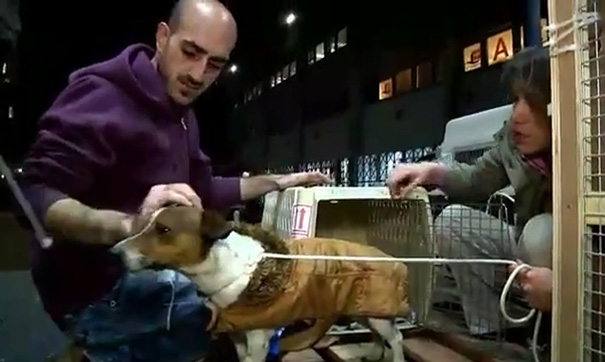 woman-rescues-250-dogs-israel-shelter-project-dog-tales-9