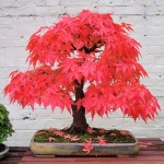 The Most Beautiful Bonsai Trees Ever