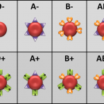 This Is How Your Blood Type Determines Your Personality