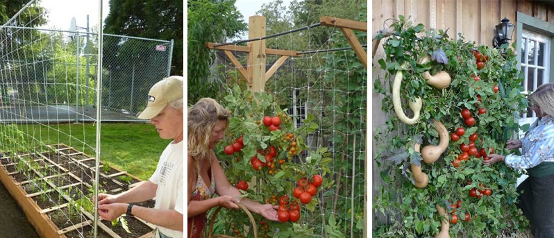 How-to-Grow-a-Constant-Supply-of-Organic-Produce-in-the-Tiniest-Amount-of-Space-2