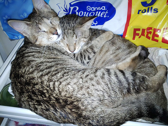 adopted-three-blind-cats-14