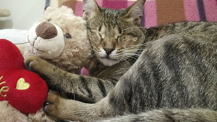 adopted-three-blind-cats-17