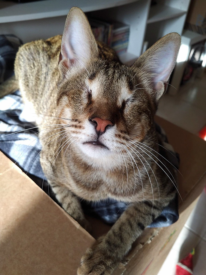 adopted-three-blind-cats-24