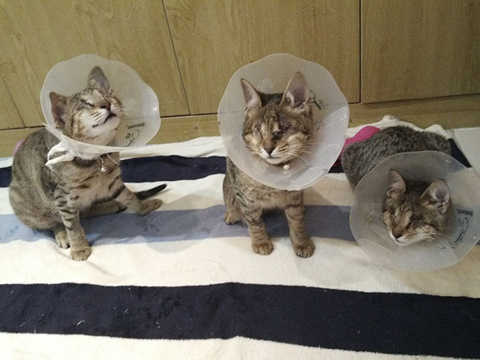 adopted-three-blind-cats-25