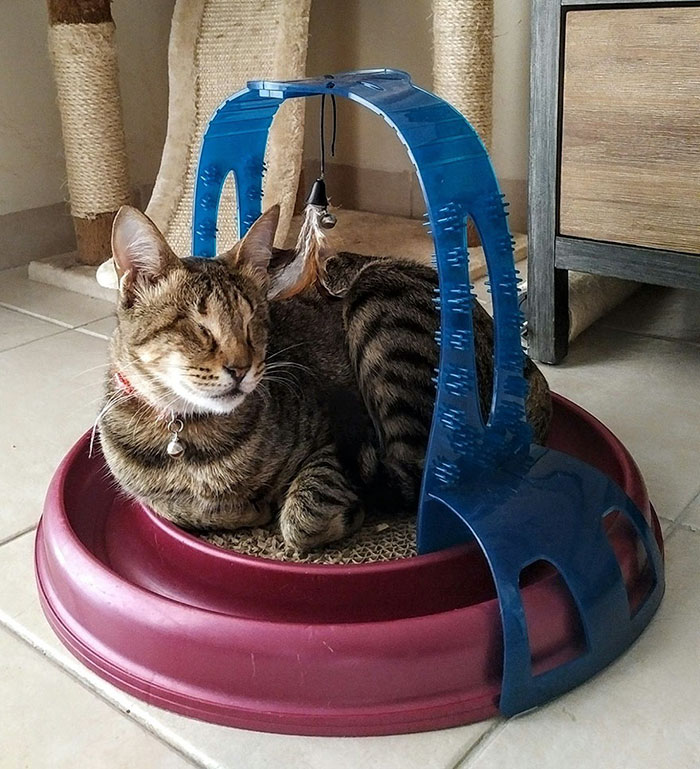 adopted-three-blind-cats-3