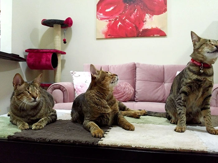 adopted-three-blind-cats-4