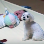 This Baby's Parents Couldn't Stop His Crying. But What The Dog Does Seconds Later